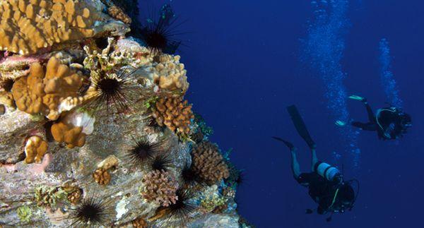 О дайвинге в чилийском Пунта-де-Чорос #Chile #diving