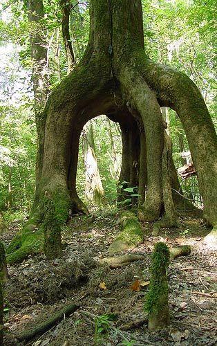 Tippy toe tree