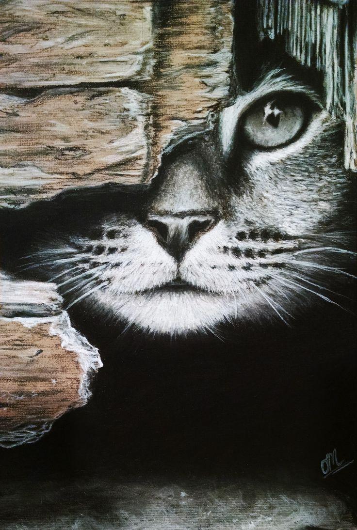 Cat Charcoal Drawing Cat Art Animal Drawings Cat