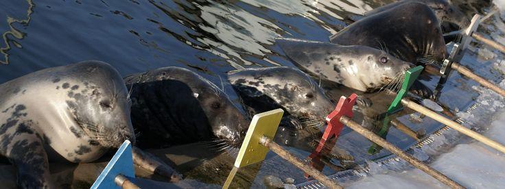 Sealarium live (Hel Peninsula)  - what seals do when no one is near?