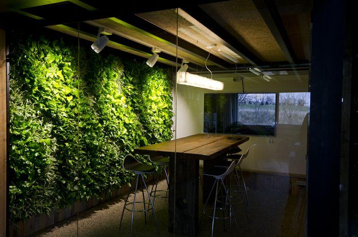 Plantevæg i mødelokale #mødelokale #plantevæg