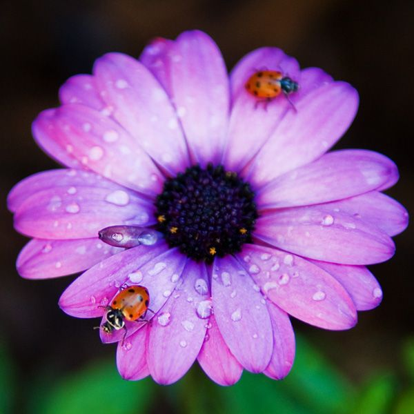 Images Of Ladybugs Ladybugs Dragonflys And Other Wings