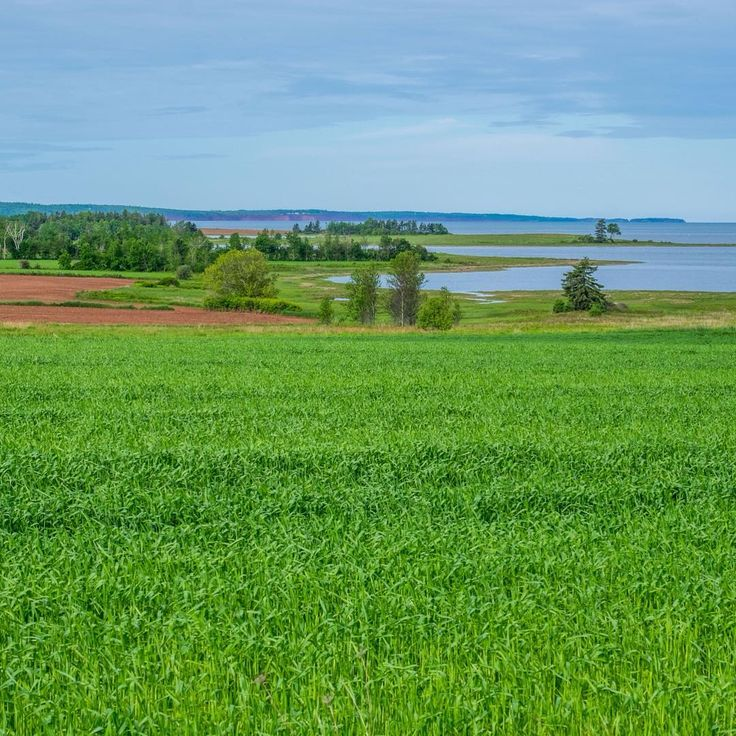 Can't believe we live in such a beautiful island! #PEI #Canada #summer #vacation #peiphotographytour #peiphotography #enjoycanada #enjoyphoto @vacationsofalifetime