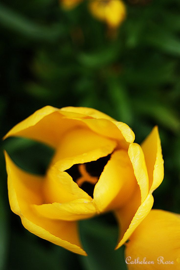 Pretty picture of a yellow flower!