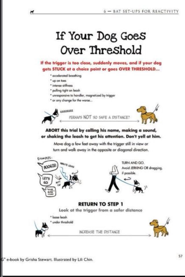 Grisha Stewart S Bat Method What To Do If Your Dog Goes Over