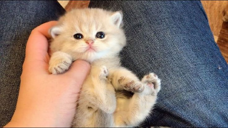 When Your Cats are Your Baby | Adorable Kittens Videos 2017
