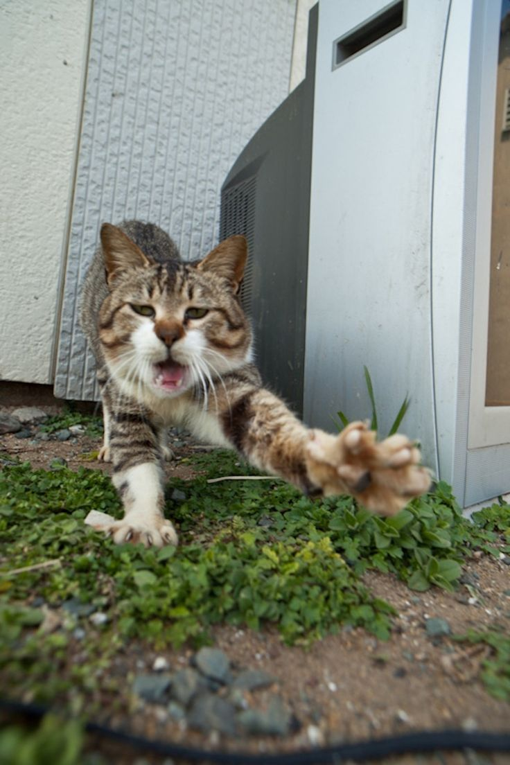 Cats seized the island of Aoshima in Japan 54