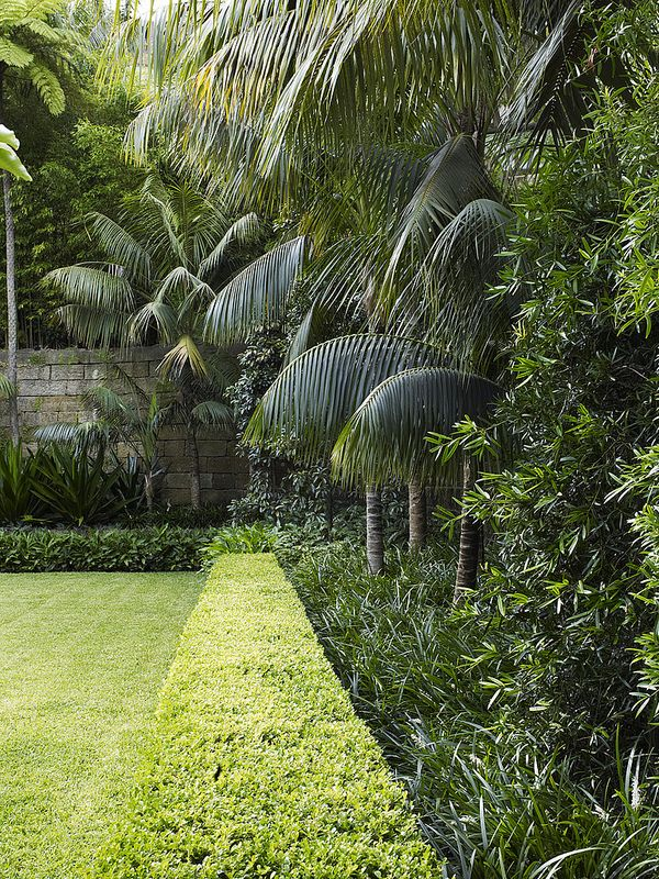 Buxus hedge with mixed planting | by William Dangar & Associates