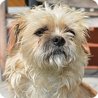 Santa Cruz Spca Dogs Adopt