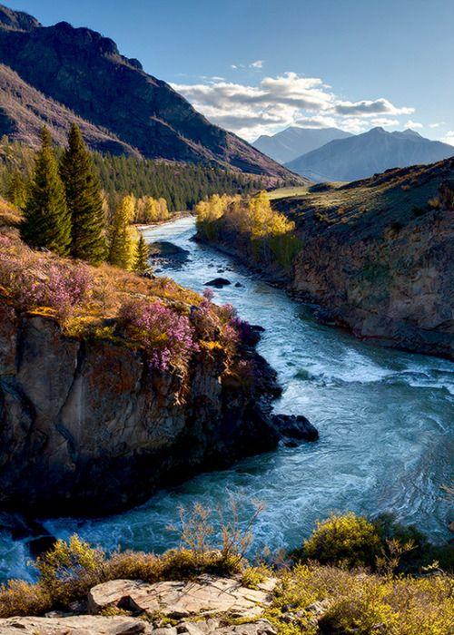 enantiodromija:   Цветет Багульник у Реки by Виталий из Н-ска
