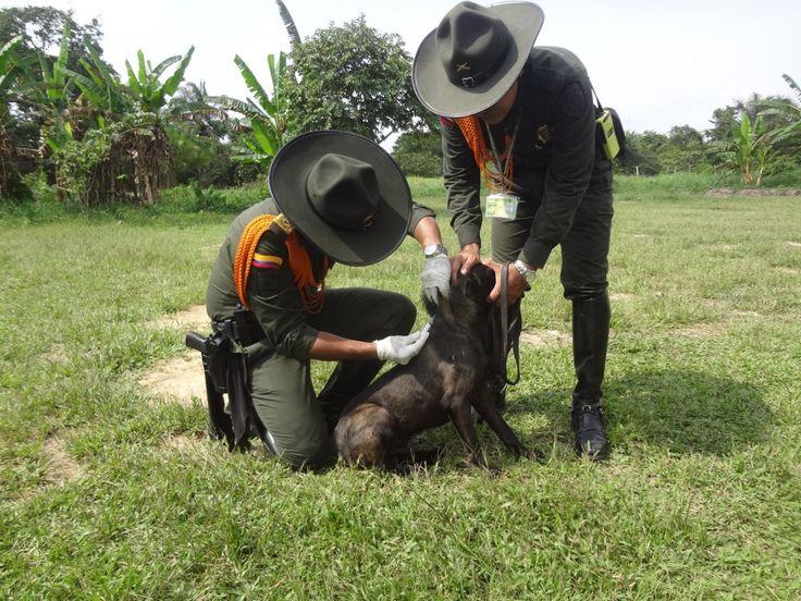 Campañas en el territorio nacional, para cuidar y proteger la salud de los caninos y sus amos.