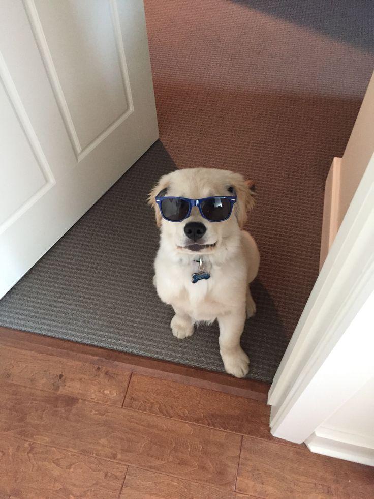Weller in sunglasses! I love my little boy!