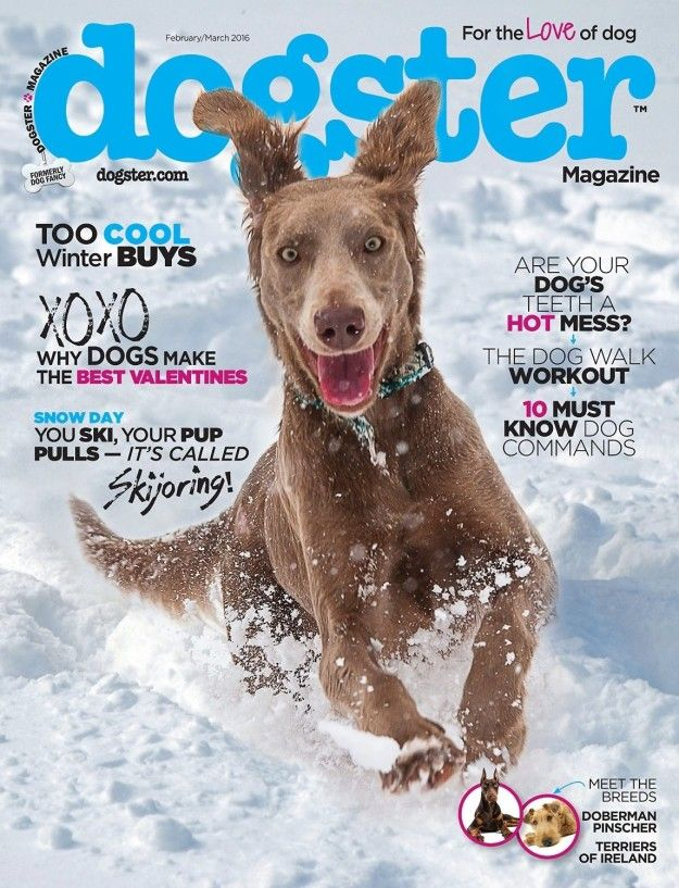 "A magazine ""for the love of dog."""