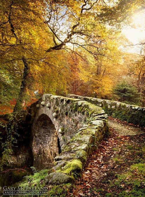 A beautiful medieval Bridge, Tollymore Forest, Ireland by Gary McParland. #bridge #Ireland #travel