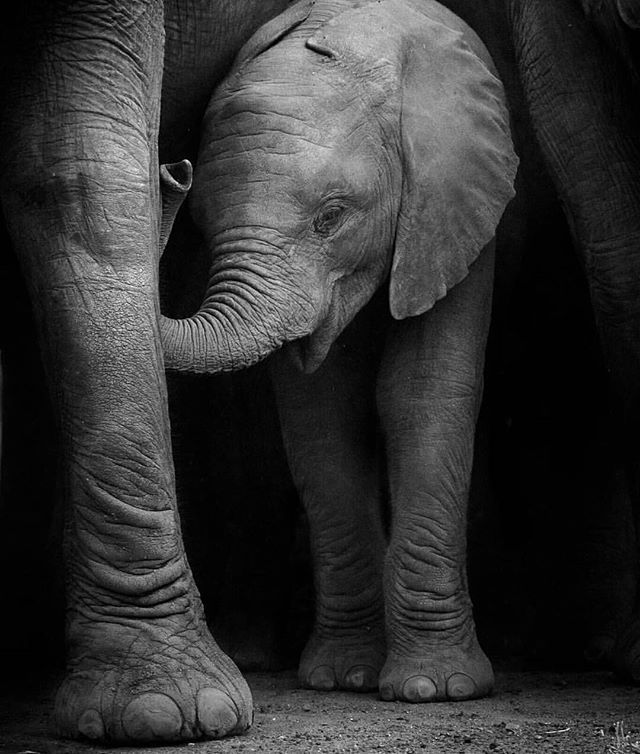 Even big boys still need their mommies sometimes.  Photo by @marlondutoit #ThisIsSouthAfrica
