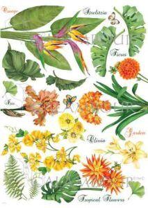 DGR 313 - papier ryżowy - Botanical -kwiaty tropikalne