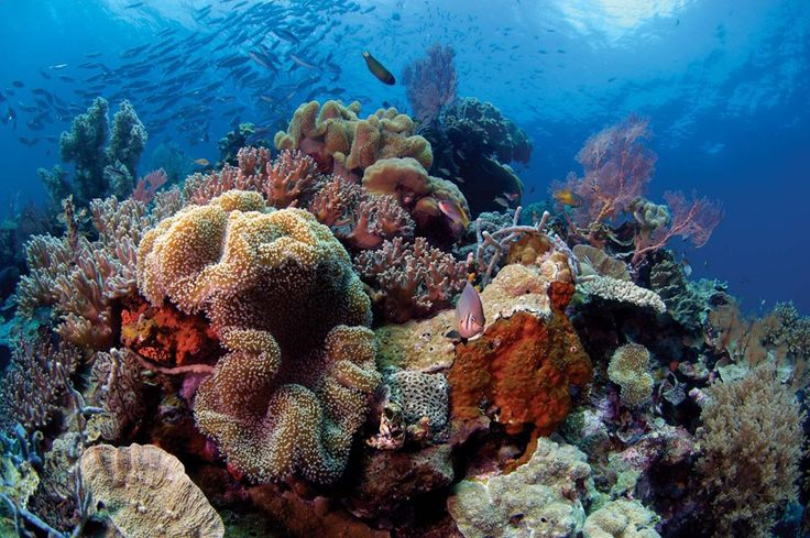 Wakatobi - Plongée Indonésie - Plongée Asie - Les plus beaux voyages de plongée - Ultramarina