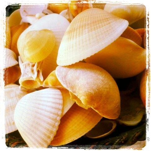 My garden shells