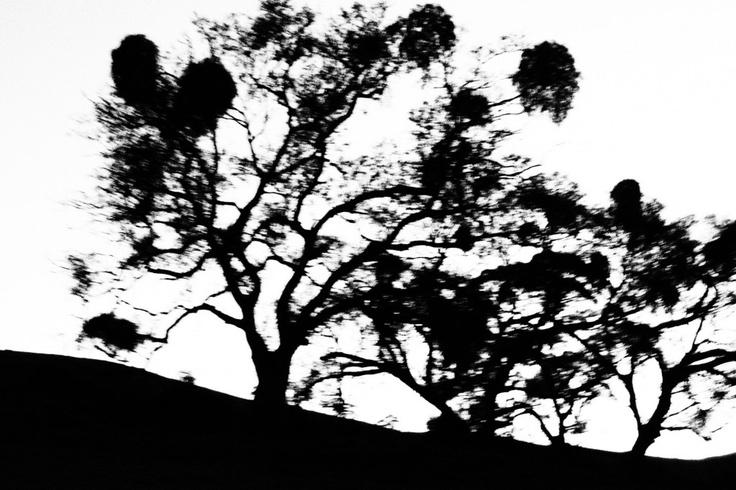 http://preciousruthlesscaptures.wordpress.com/tag/heysen-trail/