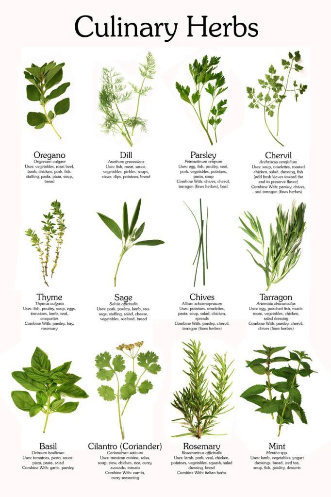 http://www.zdravi4u.cz/alternativni-medicina/byliny-koreni/7105-jedle-rostliny-podrobny-prehled