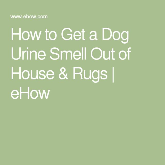 How to Get a Dog Urine Smell Out of House & Rugs | eHow
