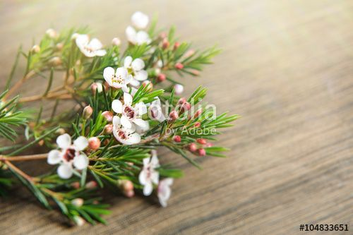 White spring flowers for mother day. Mothers day background and mother day flower. Mothers day gift.
