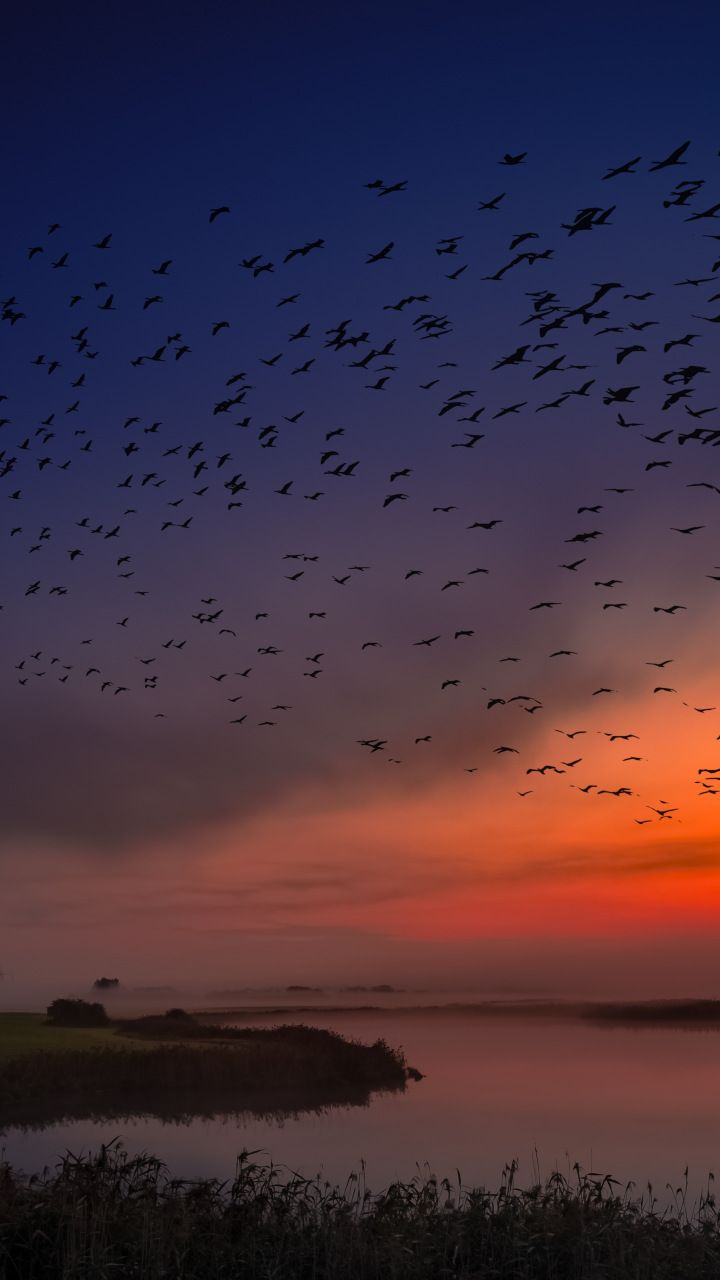 Sunset Birds Sky Coast Skyline 720x1280 Wallpaper Sky Sunset Nature