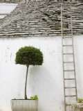 Add an Olive tree in your garden as this one in Puglia,ITaly