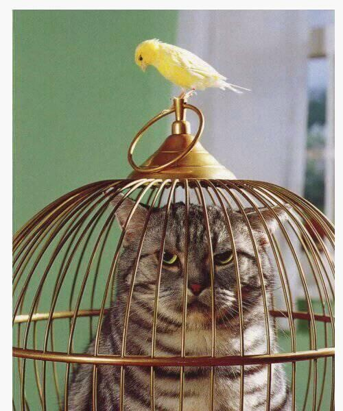 Kitty in the cage