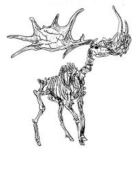 Irish elk skeleton///inspiration for my other ankle