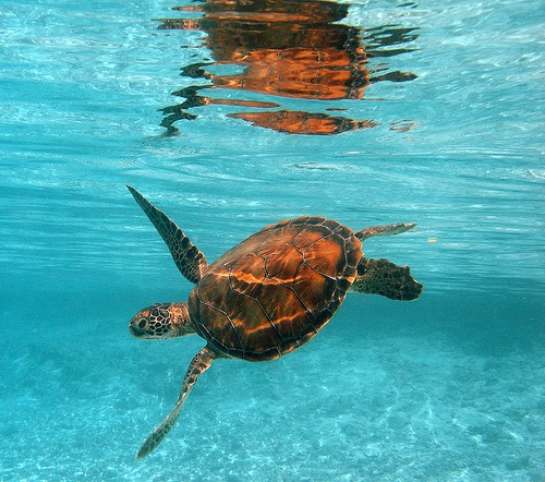 An den Stränden von Bantayan läst sich hervorragend schnorcheln wobei man fast permanent einige Seltenen Fische und mit viel Glück auch mal eine Schildkröte beobachten kann