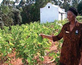 Africa Silks Farm - Graskop PopularAttractions