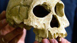 Frühmenschen: Zahn der Zeit. Als Steinzeitmenschen vor 3,3 Millionen Jahren begannen, Steinwerkzeuge zu benutzen, hatte das Folgen fürs Gebiss.