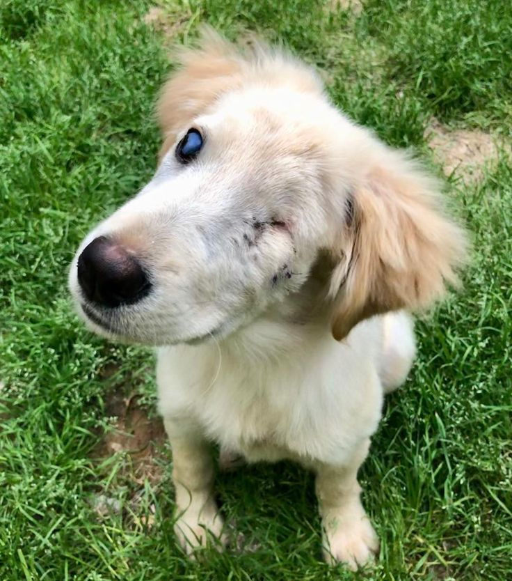 Our precious Golden Retriever mix baby is ready for