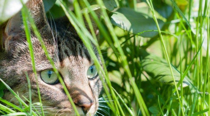 Astuces pour éloigner les chats du potager et des plantations