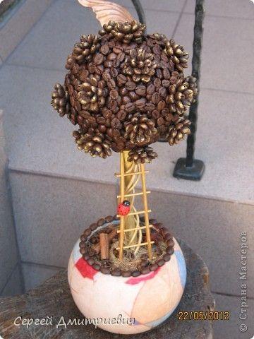 Кофейное дерево с пошаговым фото