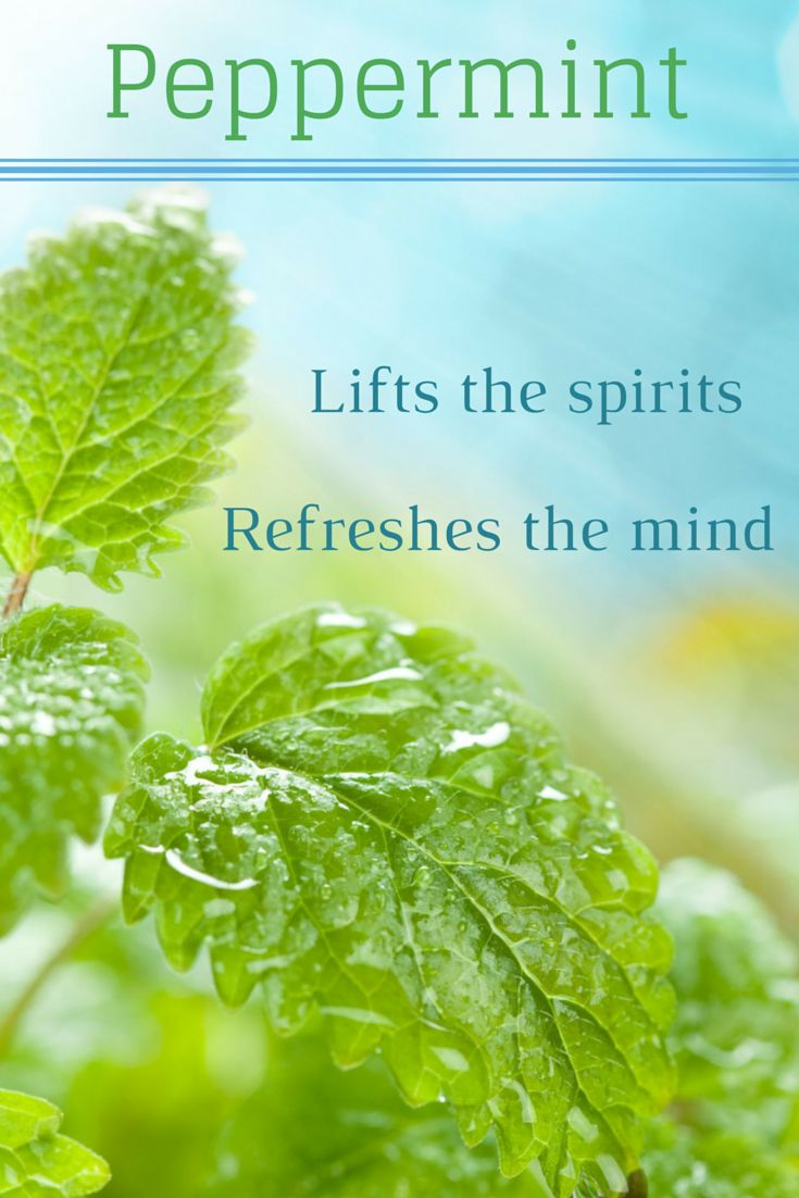 Peppermint  is another herb that lifts the spirits. The essential oil is a stimulant that refreshes the spirit and mind, increasing mental agility and alleviating mental fatigue. Use peppermint as an excuse to introduce some decadence into your life.