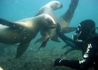 Scuba diving in Península de Valdés