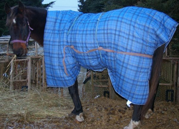 Best 25 Horse Blanket Ideas On Pinterest Horse Rugs