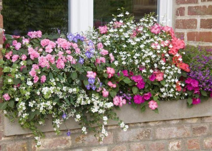 Jardinière fleurie -F. Marre - Rustica