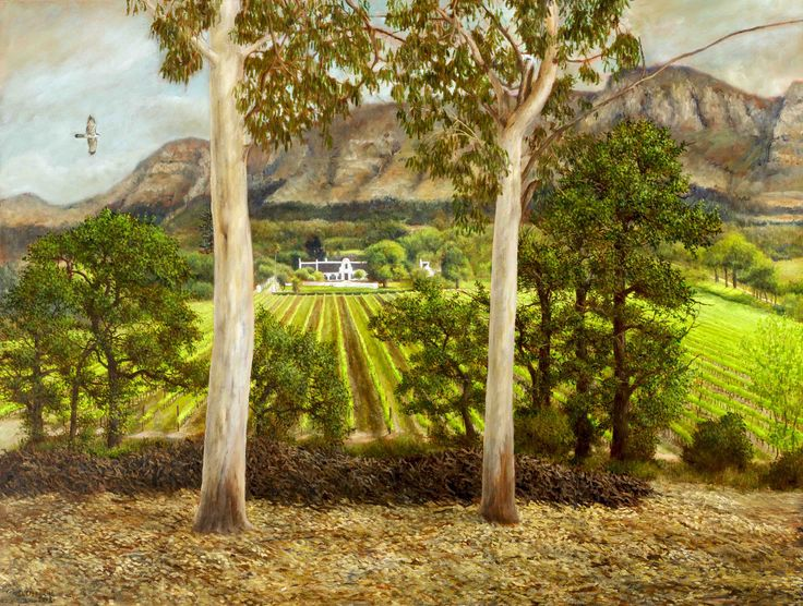 View of Klein Constantia - Oil on Canvas. 79 x 60 cm.  Looking at the Klein Constantia Manor House through large Eucalyptus trees while an African Black Sparrowhawk flies across. Napoleon Bonaparte drank the wines made on this farm. I painted this view sitting on a slope. This was before the pine forests on the mountain were destroyed by a massive fire in 2015.
