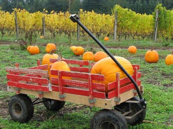 pumpkin patch - red wagon