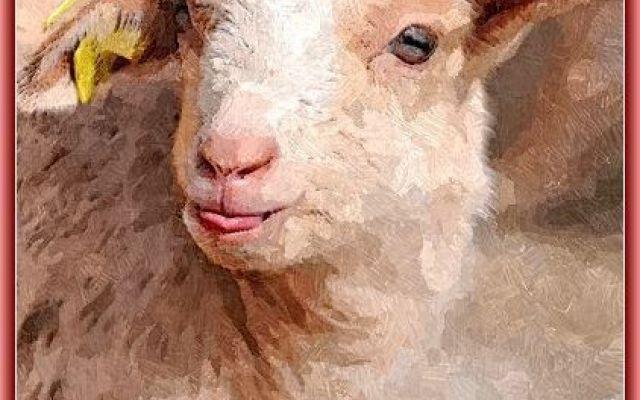 Elaborazioni grafiche - Il mite agnello In questo post desidero inserire la figura che fa da contraltare all'immagine dell'aquila: l'agnello. Per la sua innocenza, semplicità e pazienza l'agnello è divenuto immagine dell'uomo pio. Simbolo  #agnello #elaborazionegrafica #innocenza