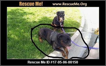 ― Colorado Rottweiler Rescue ― ADOPTIONS ―RescueMe.Org