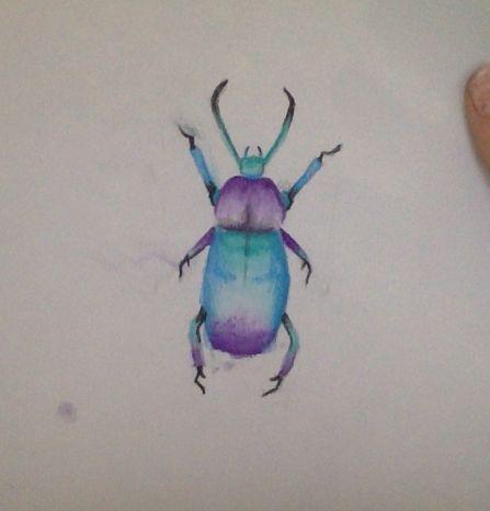 random beetle i drew