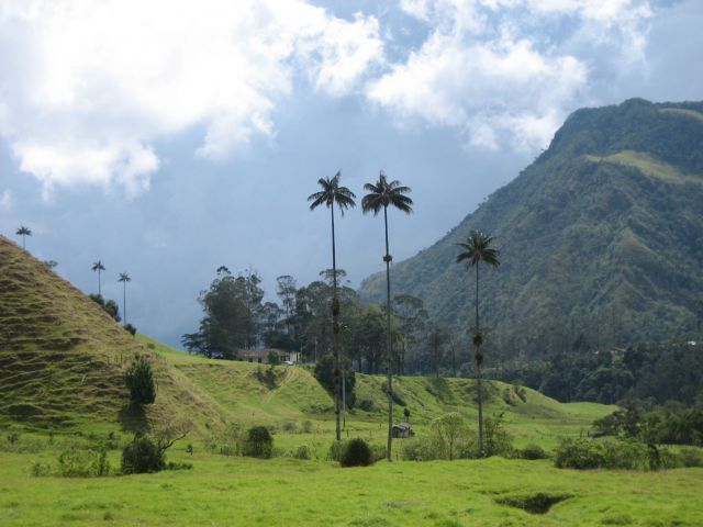 #Valle de Cocora in Salento,  Colombia where on a short tour you can walk in this #gorgeous #landscape among 100ft palm trees! #Mountains #trees #landscapes #incredible #mustsee #topdestinations