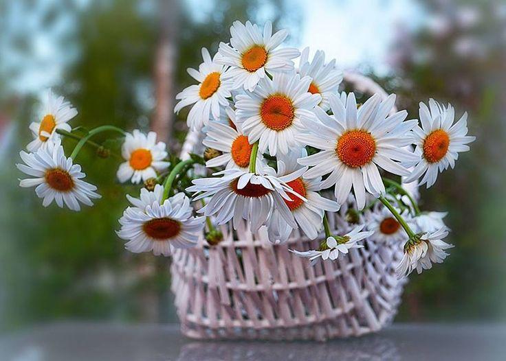 Talán ezt szeretem benne a legjobban,Míg szeretsz, azt érzed,Az szeret....,Kétségbeesésünk, amikor elvesztünk egy szeretett lényt,,Akit nem szeretnek,,Szeretetből élők sokkal mélyebbre látnak,Ha bármit megadhatnék neked,,Ha szeretet van az életünkben,,A szeretet az a szikla,,A szeretetet mindig el kell fogadni, - memi59 Blogja - Idézetek-Versek-Alföldy Géza , Idézetek-Versek-Tormay Cécile,1848-március-15,1956-Október - 23,A költészet napja- április 11,A Magyar Kultúra…