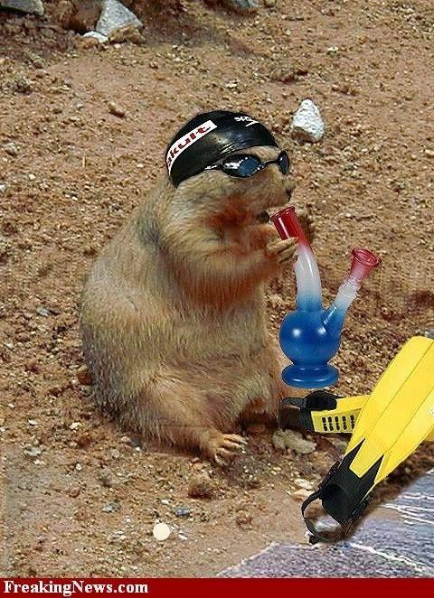 97 Best Ground Hog S Day Images On Pinterest Ground Hog