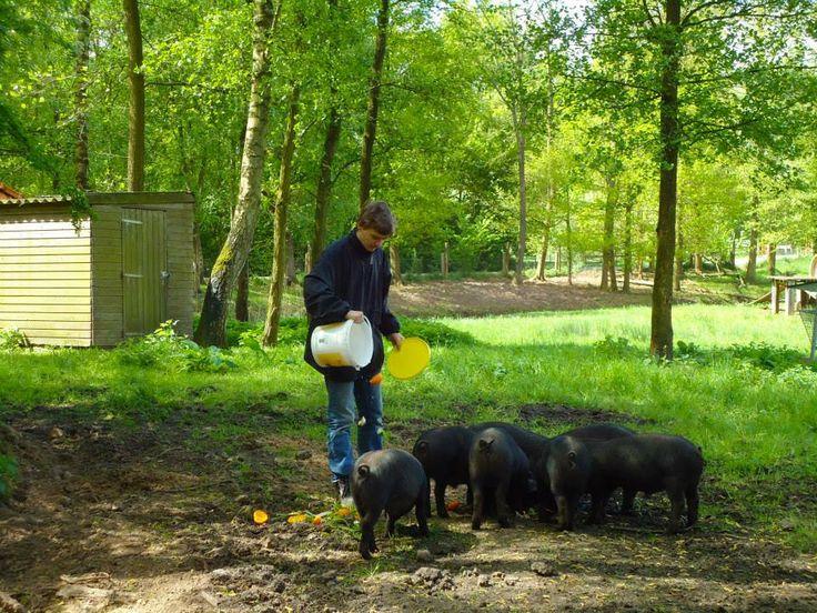 Wil jij ook samen met Anno Jan de varkentjes voeren en aaien? Kom op vakantie bij ons en maak het zelf mee!
