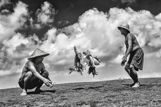 "In Bali, Indonesia. ""Two salt farmers indulging in their favourite pastime; a round of a friendly rooster fight!"" Photo: Jino Lee / www.tpoty.com"